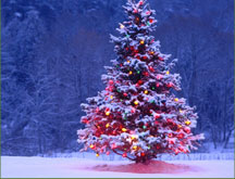 Blue Spruce Christmas Trees | Get Yours Delivered Fresh ...